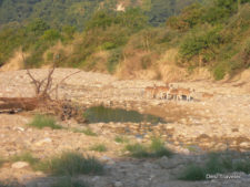 Visit to Meet the King Of Jungle - Jim Corbett National Park