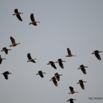 Birds Around PBEL City – The Lake Front