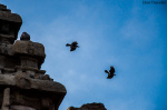 Skywatch Friday- Crows Race At The Top of Shore Temple
