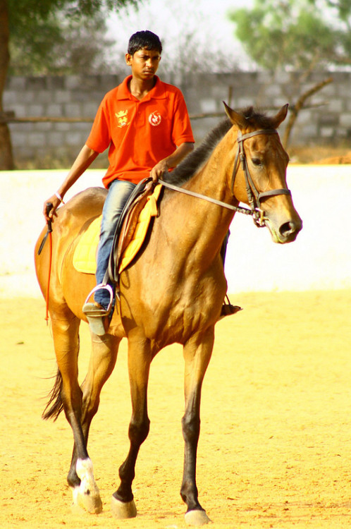 Horse and rider at Hyderabad Polo and Riding Club