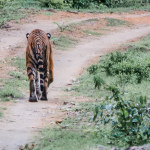 Eco Volunteer Training – Bandipur Tiger Reserve