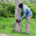 Using Tiger Camera Traps for Tiger Census