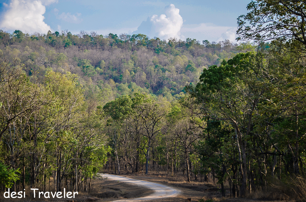 Dense forest growing on the mythical Kala Pahar in Pench