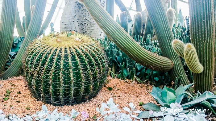 Cactii at Gardens by the bay Singapore