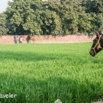Swachh Bharat Abhiyan – Travel Tuesday Picture