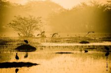 A Morning Drive to Sultanpur Bird Sanctuary & The Last Sarson Ke Khet of Gurgaon