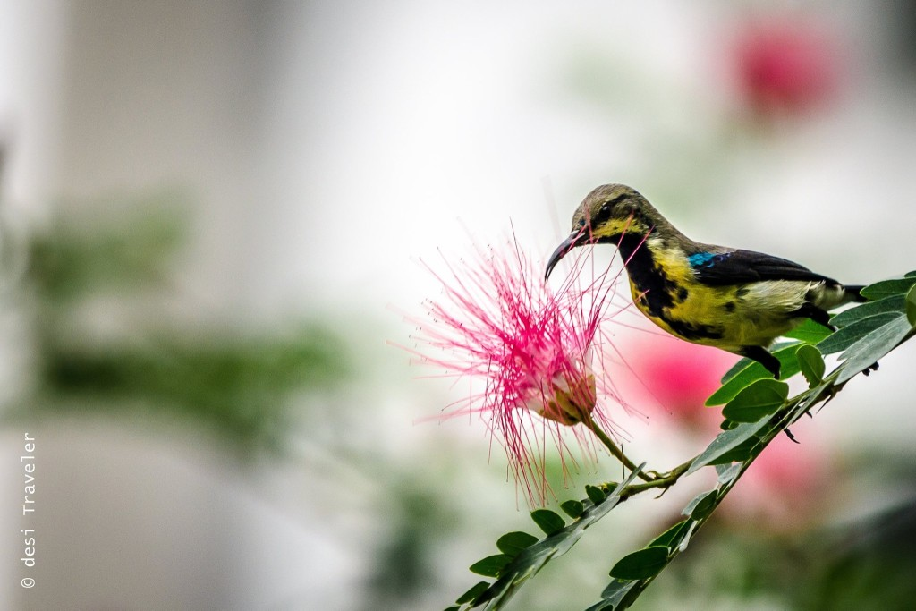 purple sunbird gurgaon