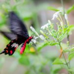 Butterfly Garden – Changi Airport Singapore