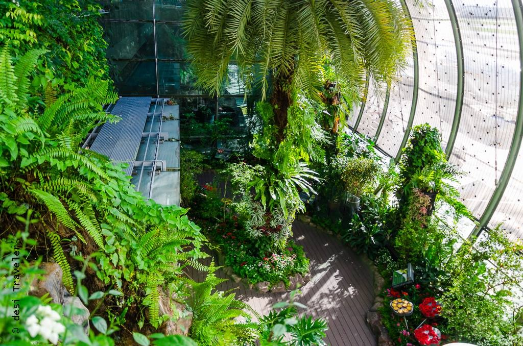 Butterfly Garden Changi Airport Singapore