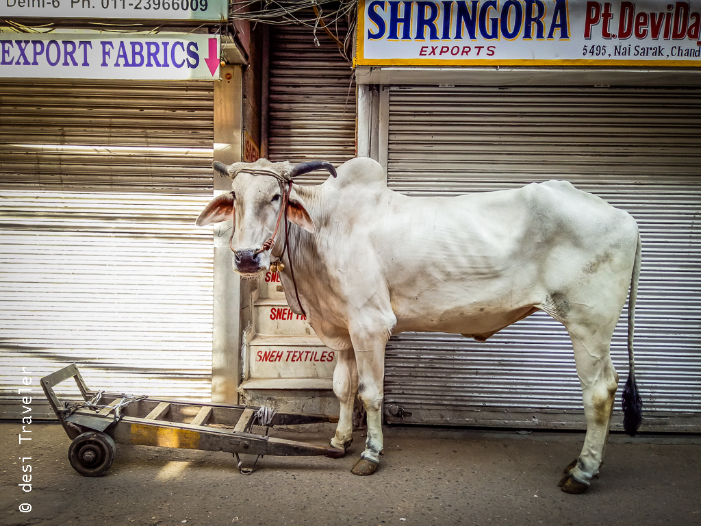 Bullock Cart Chandni Chowk