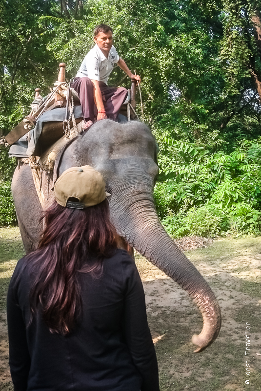 Elephant Safari Dudhwa National Park