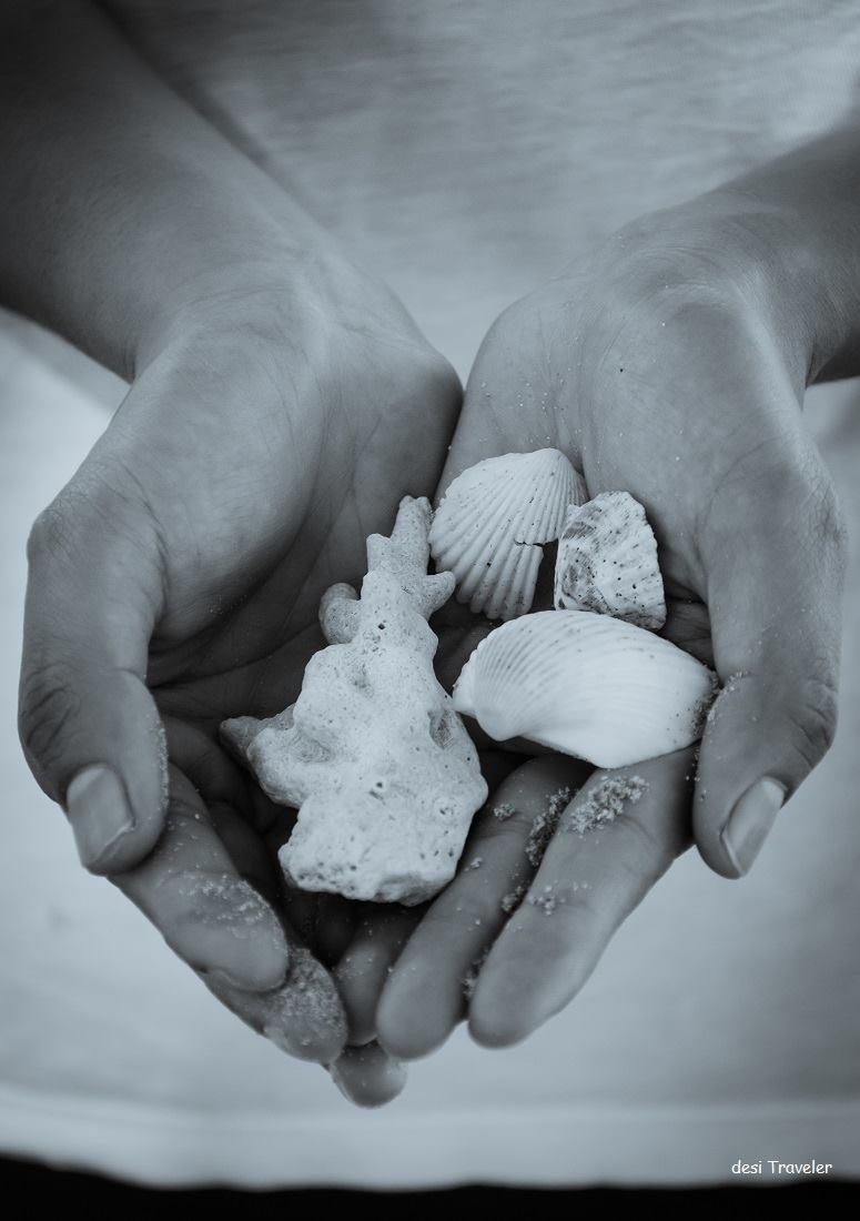 woman holding sea shells in her hands