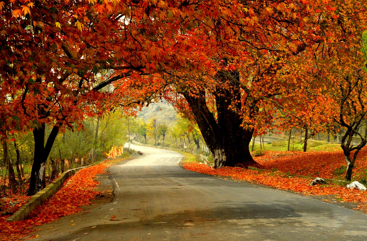 Autumn colors in Kashmir India