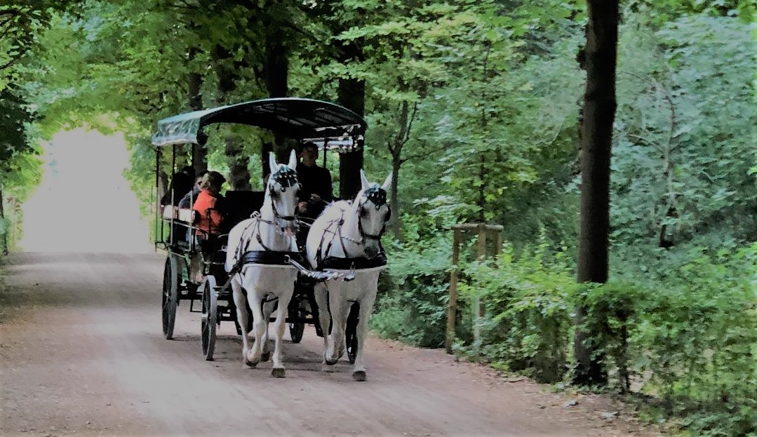 horse carriage ride Vienna Austria
