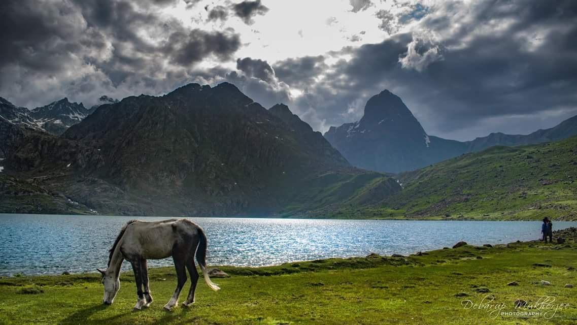 Horse on Lake bank Kashmir