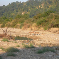 A Visit To Jim Corbett National Park To See Tigers