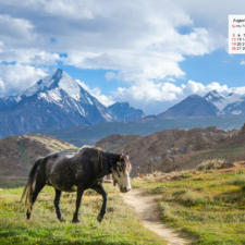 August 2018 Calendar Wallpaper - A Horse Near Chandratal Spiti
