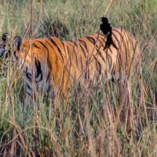 You Are The Power Of We- Join Hands To Save Our Tigers