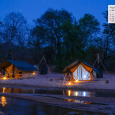 Free Download August 2019 Wallpaper Calendar - A Night Camp Satpura National Park
