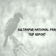 Sultanpur National Park Gurgaon -Trip Report