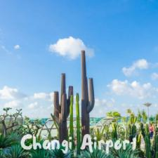 Cactus Garden Changi Airport Singapore